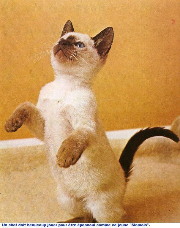 Tirer de nature et vie le chat un animal attachant - Chat qui dort sur son maitre ...