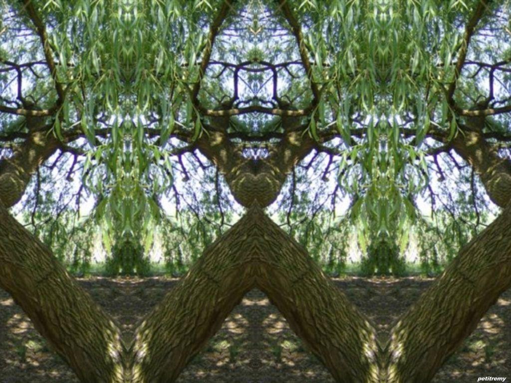 Les arbres  - Page 4 9bw0t234