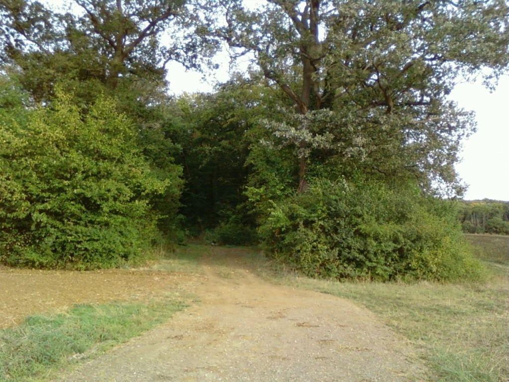 016-Image de Forêt