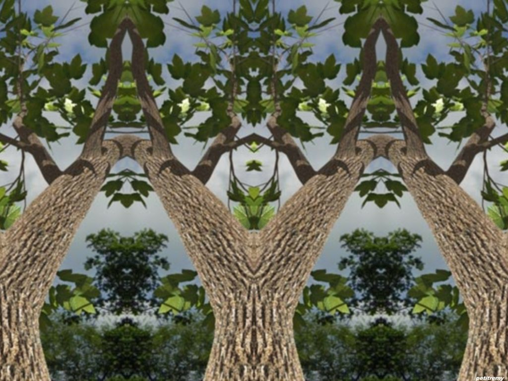 Les arbres  - Page 4 Vn49qacz